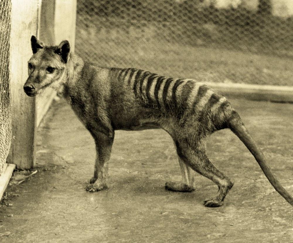 Extinct animal sightings - photo#22